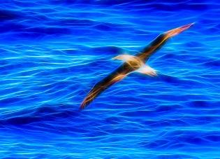 5 - Albatross