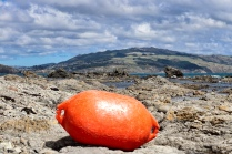 Standing out - Bouy at Plimmerton - Shane Petterd